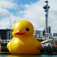 Rubber Duck in Auckland,2011